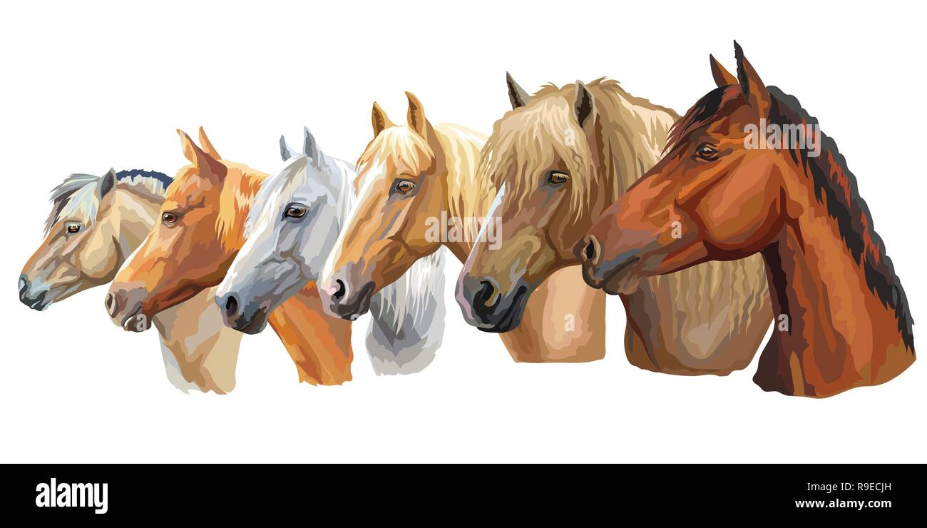 Set of colorful vector portraits of horses breeds looking in profile (Russian Heavy Draft Horse; Byelorussian Harness Horse; Orlov trotter horse) isol - Stock Image