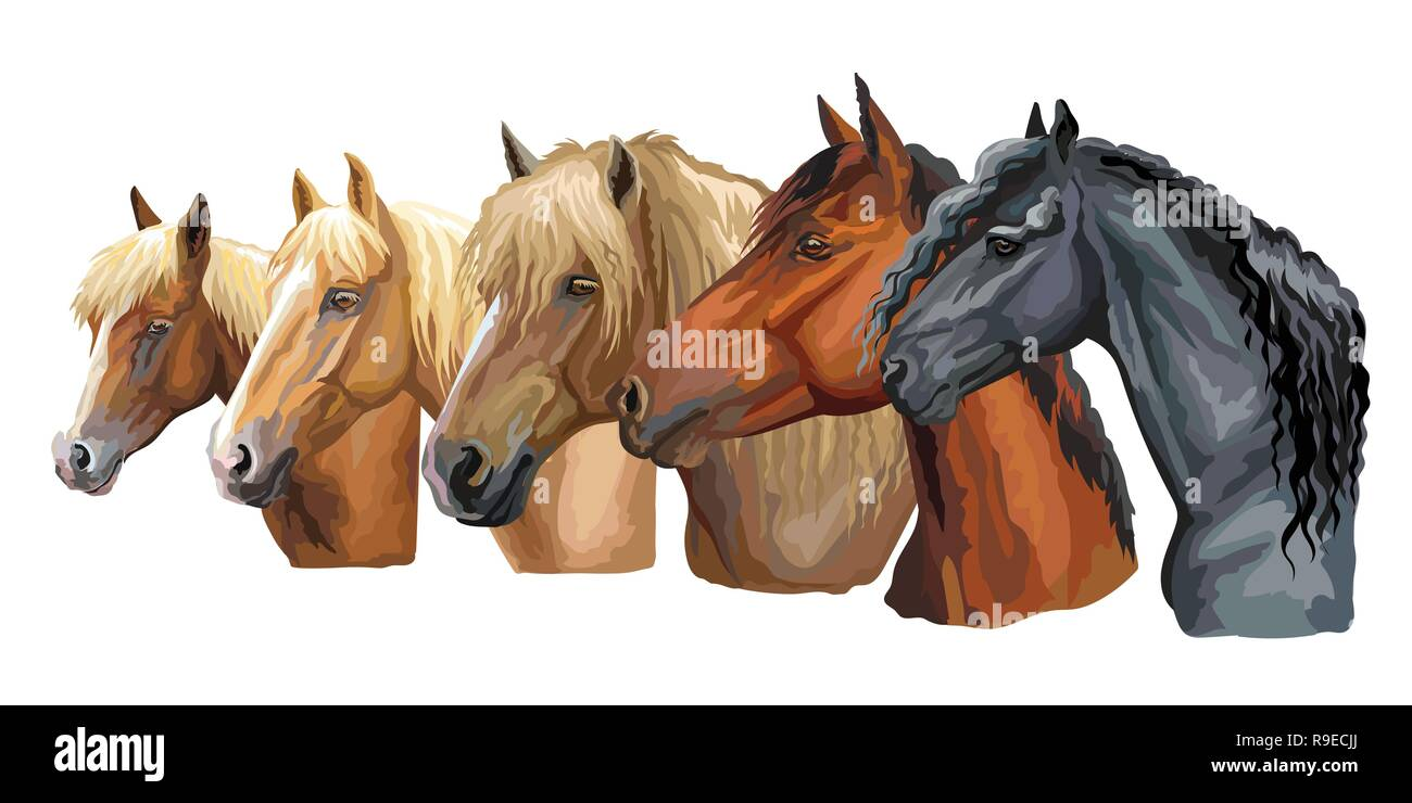 Set of colorful vector portraits of horses breeds looking in profile (Russian Heavy Draft Horse; Byelorussian Harness Horse; Friesian horse) isolated  - Stock Image
