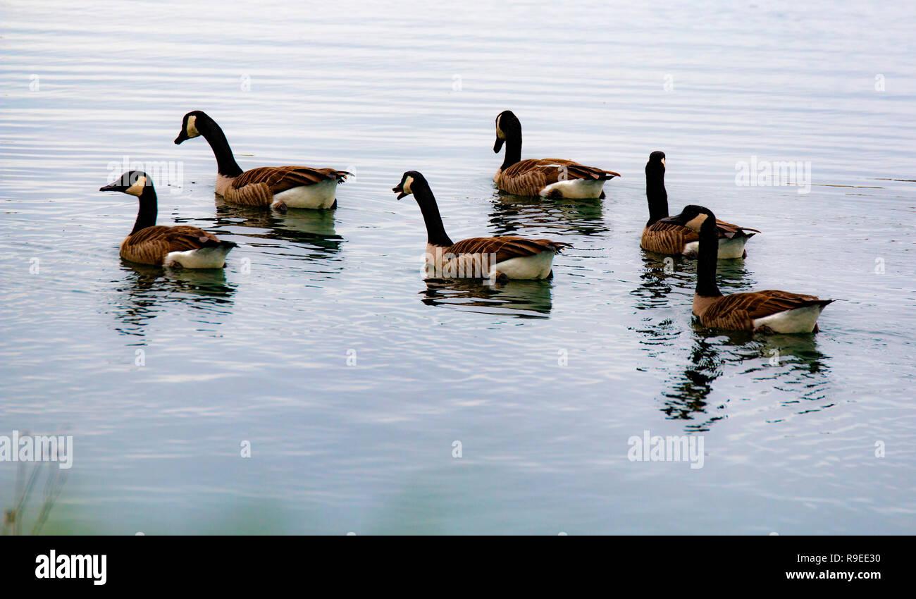 a walk around the pond - Stock Image