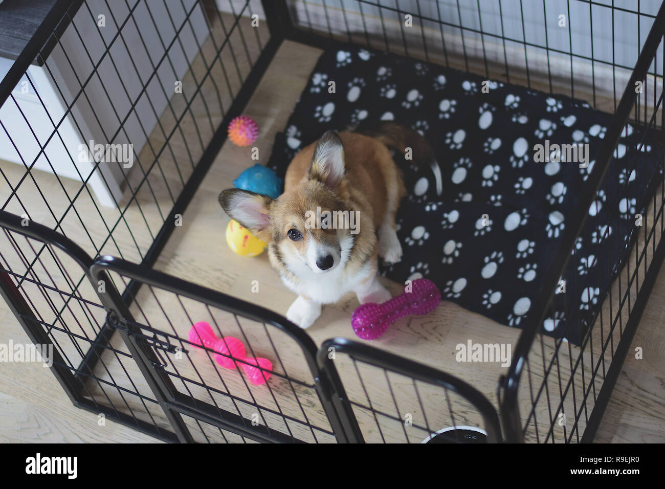Welsh Corgi Pembroke Puppy Dog Sitting In A Crate During A Crate Training Stock Photo Alamy