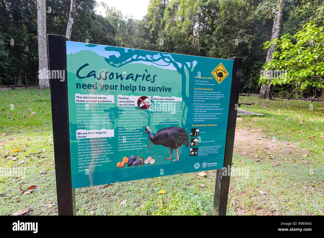 Information sign to protect cassowaries, Hypipamee National Park, Atherton Tableland,  Far North Queensland, FNQ, QLD, Australia - Stock Image