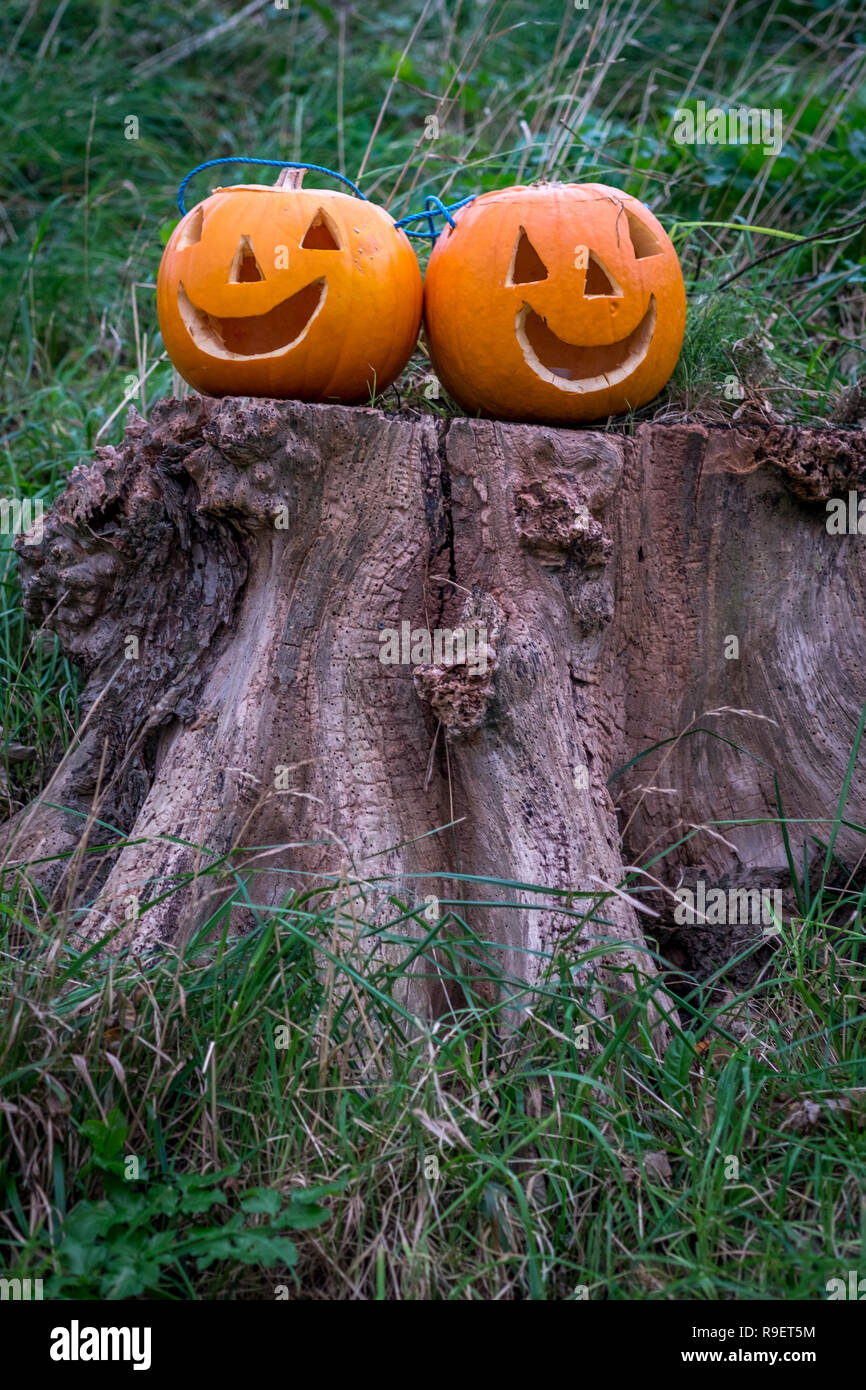 two pumpkins on tree stump with faces cut out for halloween - Stock Image