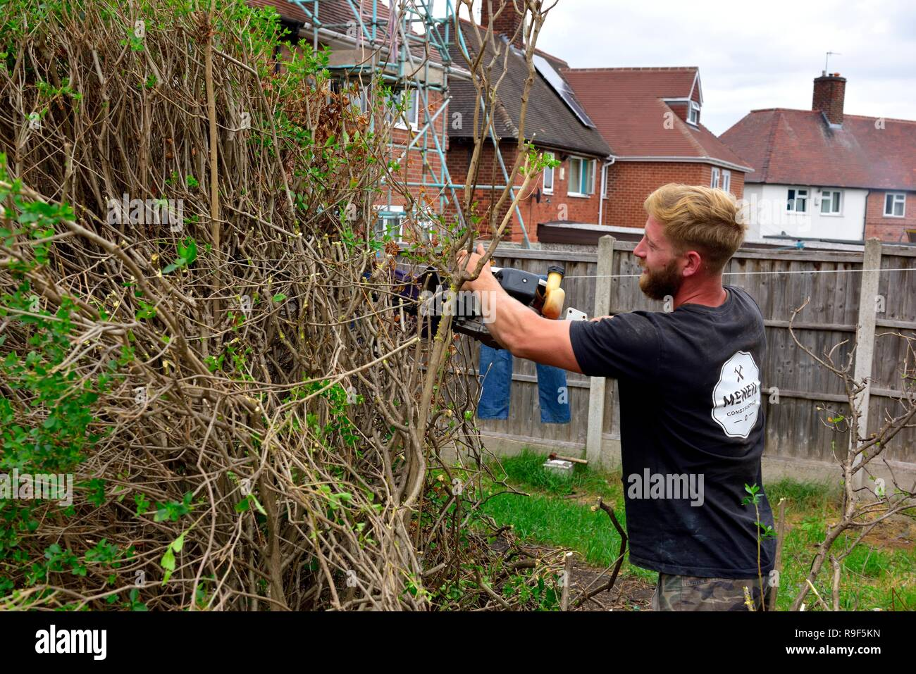Worker cutting down a hedge in a residential back garden,Nottingham,UK - Stock Image