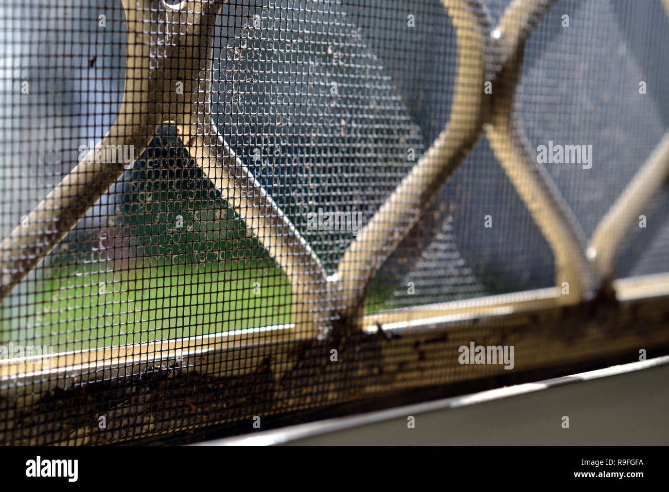 Dust, Dirt and Dead Bugs in Window Track, Windowsill and Fly Screen - Stock Image