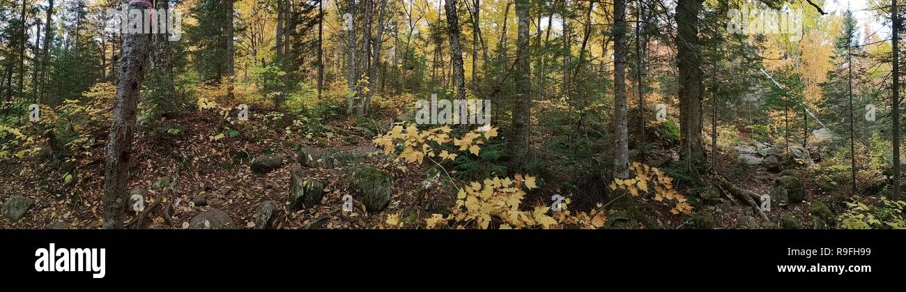 Panoramic photo taken of a forest in autumn in the province of Quebec, in the region of Lanaudiere at the end of the month of October 2018. - Stock Image