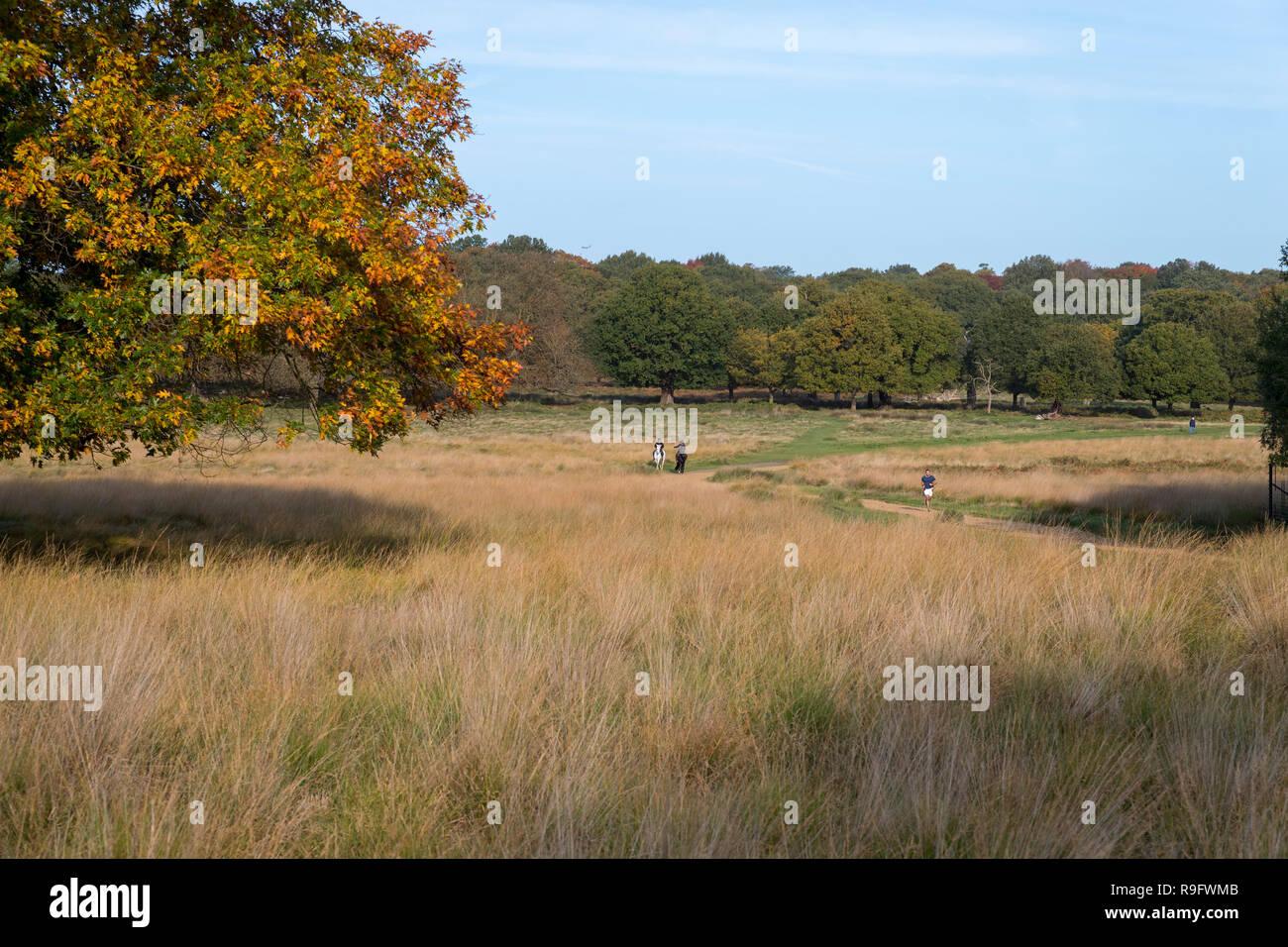 Richmond Park; London; UK - Stock Image