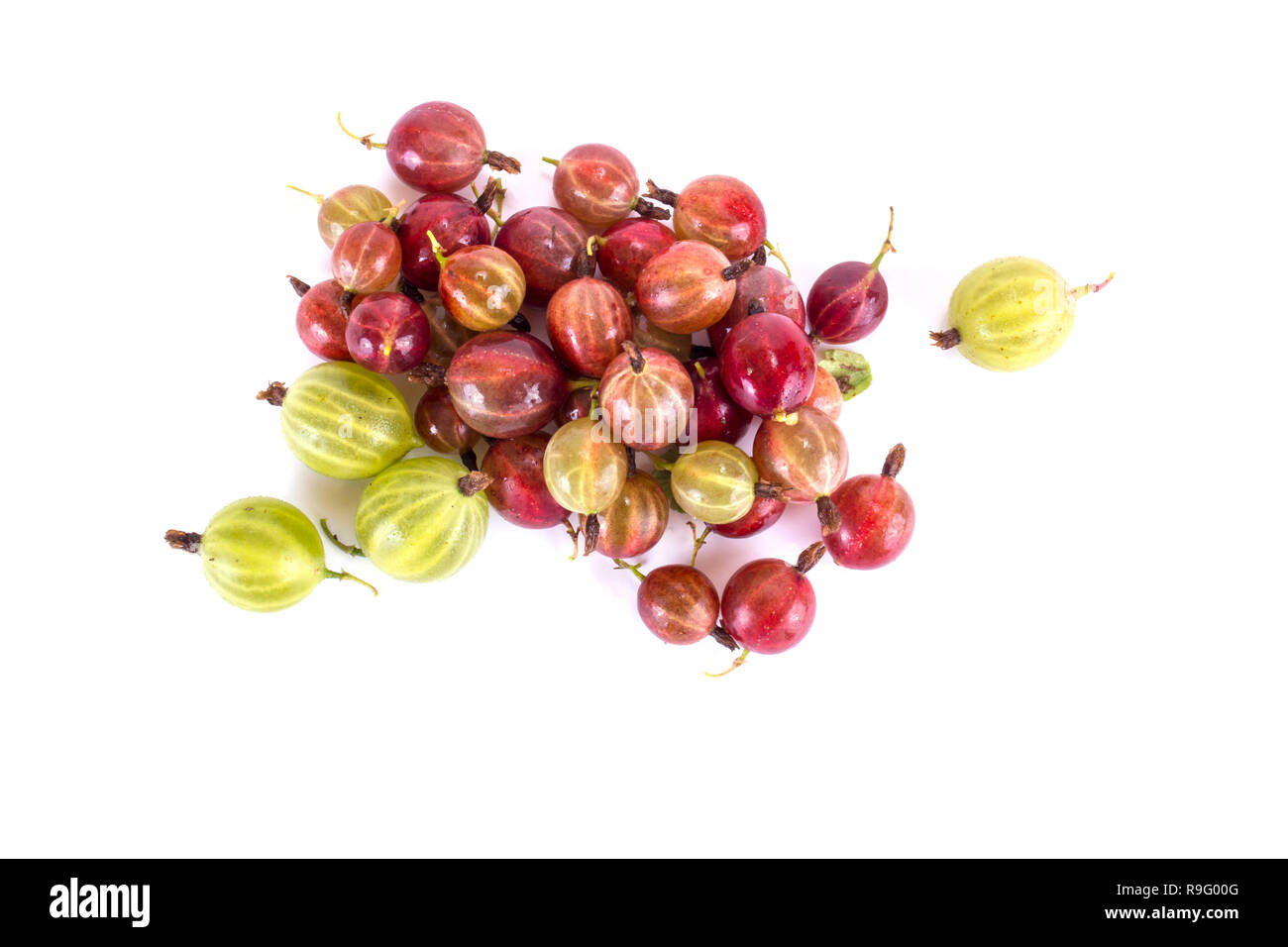 Ripe berry of gooseberry it is isolated on a white background - Stock Image