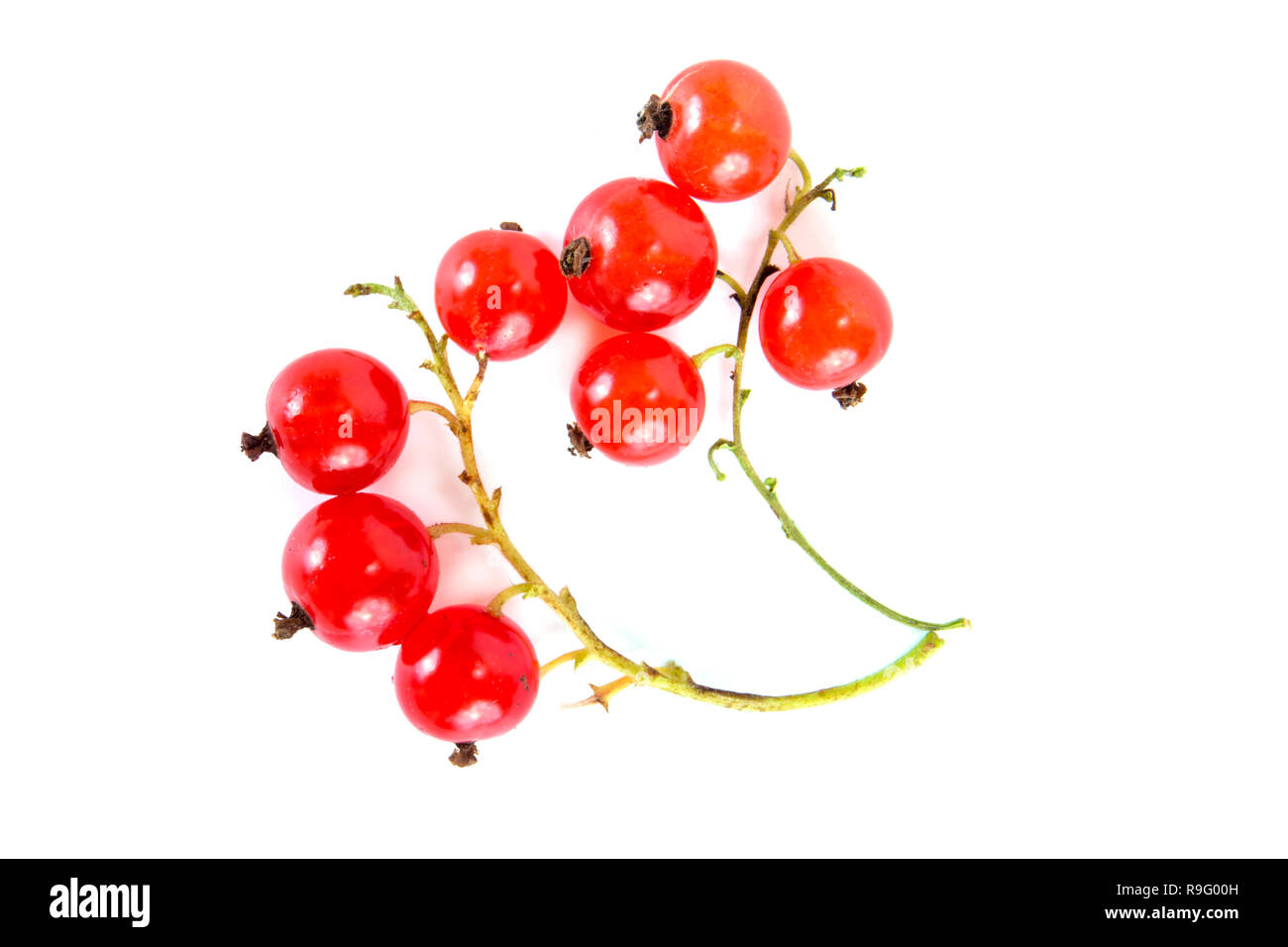 Ripe berries of red currant are isolated on a white background - Stock Image