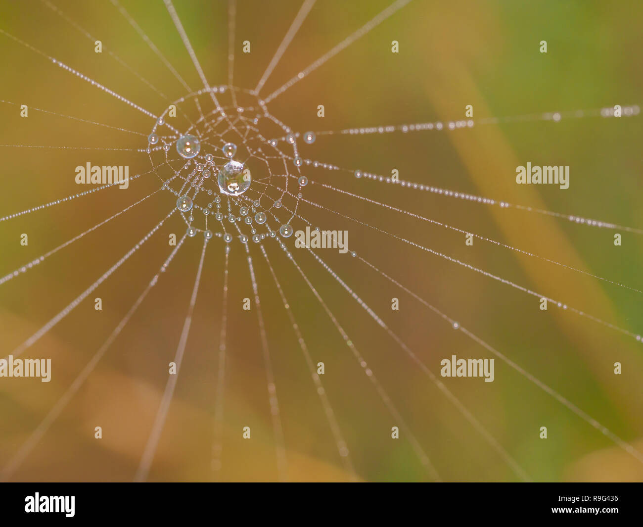 The humidity in its purest state - Stock Image