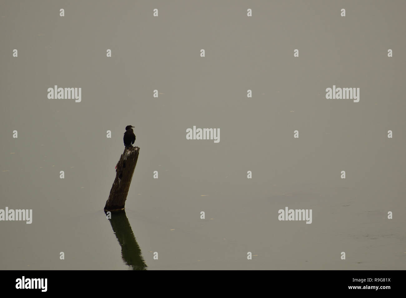Bird sitting on a bamboo above river water Stock Photo