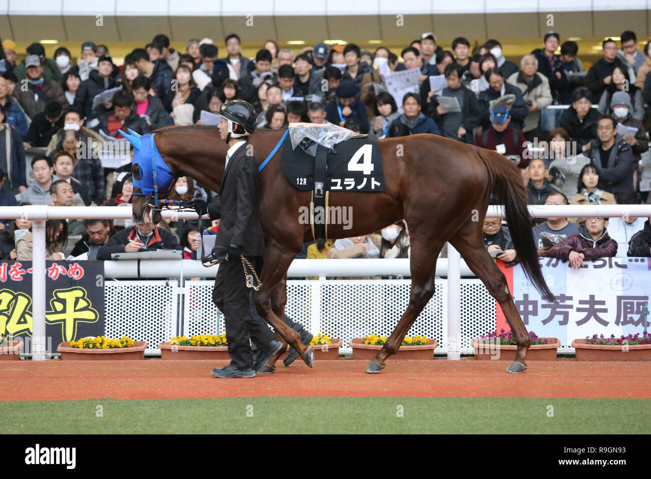 Hyogo Japan 23rd Dec 2018 Yuranoto Horse Racing Yuranoto Is