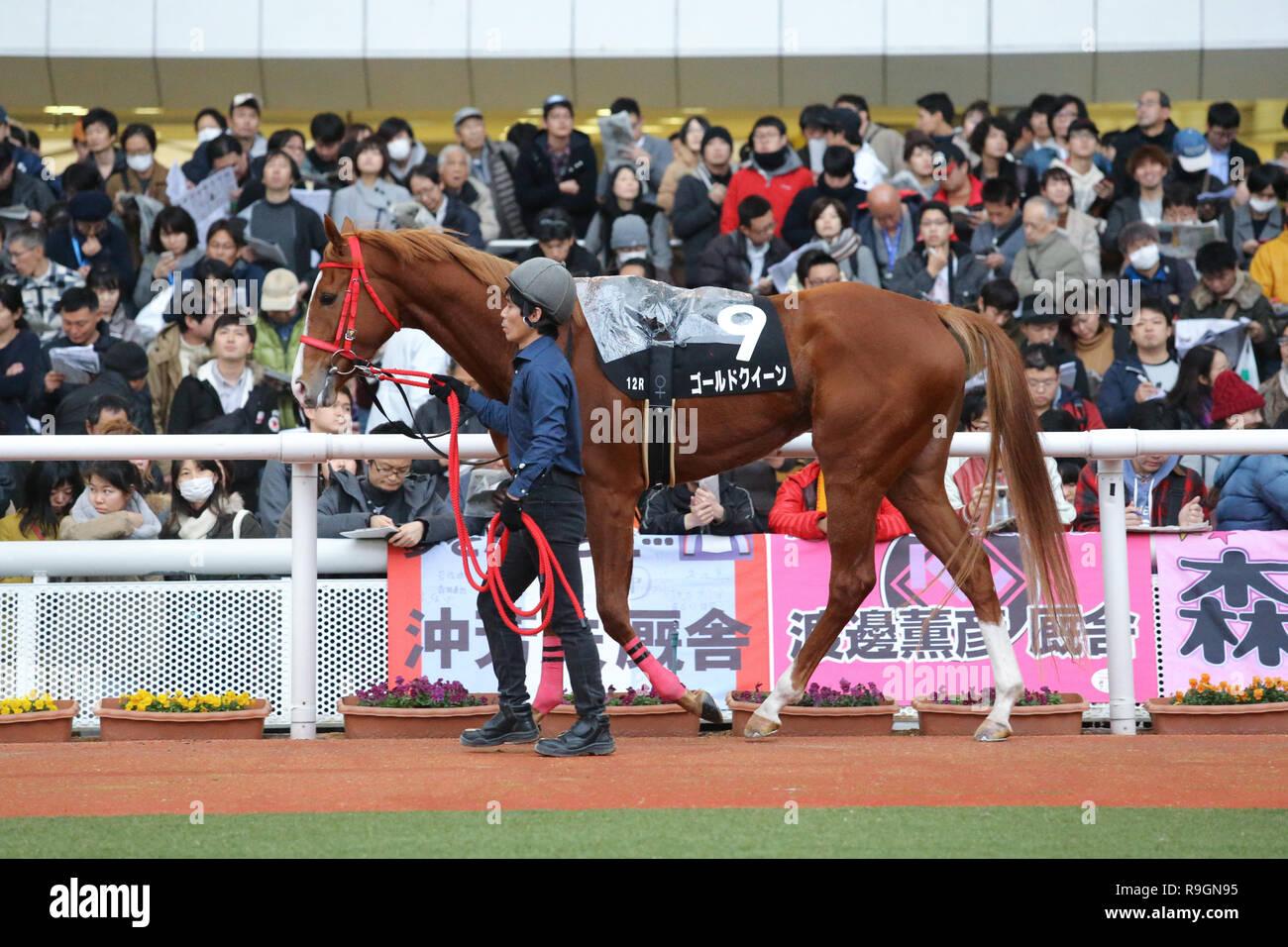 Hyogo Japan 23rd Dec 2018 Gold Queen Horse Racing Gold Queen