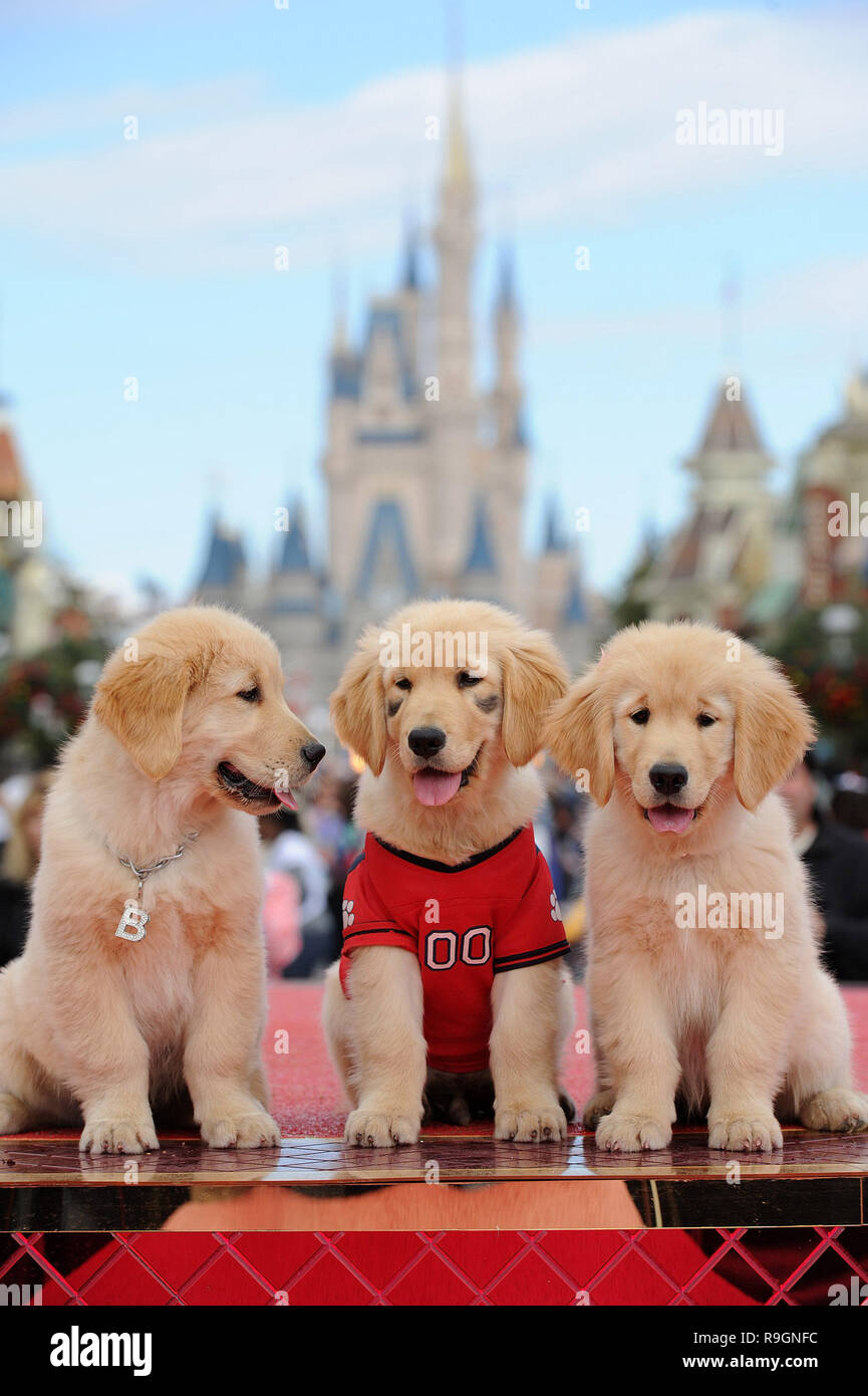 LAKE BUENA VISTA, FL - DECEMBER 02: Three of the canine stars of the upcoming Disney Blu-Ray and DVD film 'Treasure Buddies' make a special appearance during taping of the 'Disney Parks Christmas Day Parade' at the Magic Kingdom park on December 2, 2011 in Lake Buena Vista, Florida. The 28th annual 'Disney Parks Christmas Day Parade' airs nationwide December 25, 2011 on ABC-TV and features performances by a variety of stars from both Disneyland Resort in California and Walt Disney World Resort in Florida.  People:  3 Puppies, Treasure Buddies - Stock Image
