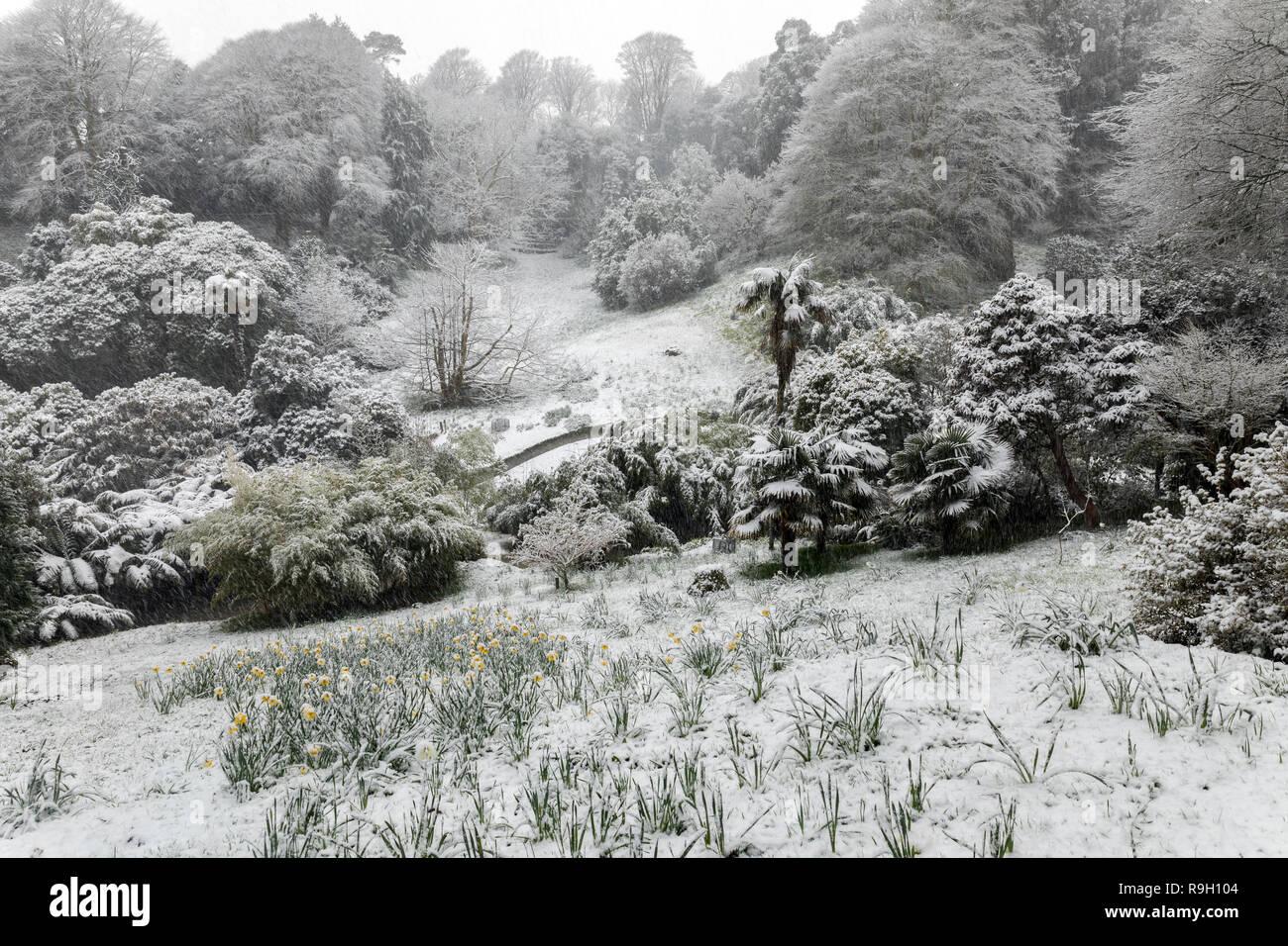 Trebah Garden; Snowing; Cornwall; UK - Stock Image