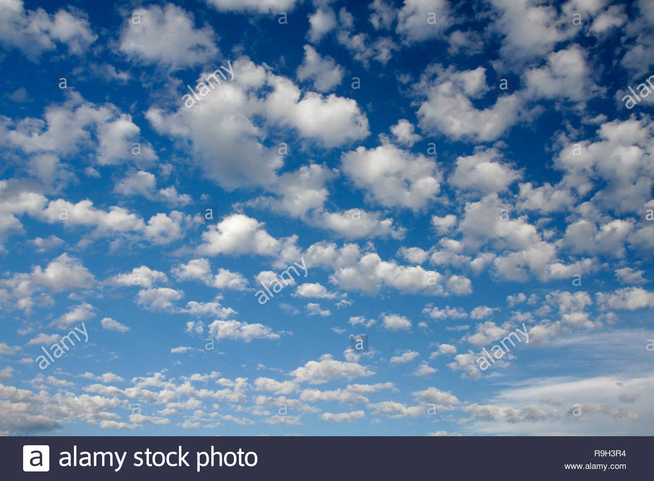 Cumulus clouds over Cascades Mountain, blue and white skyscape, Carpenter Mountain, HJ Andrews Forest, Willamette National Forest, Oregon, USA - Stock Image