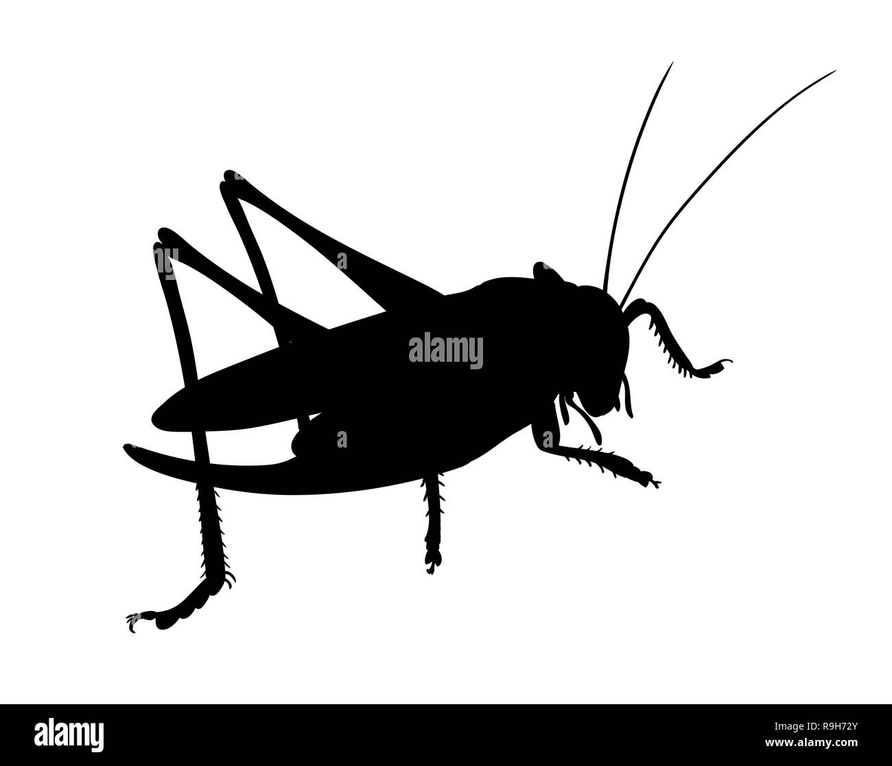 Grasshopper, side view,. Silhouette of grasshopper, vector. - Stock Vector