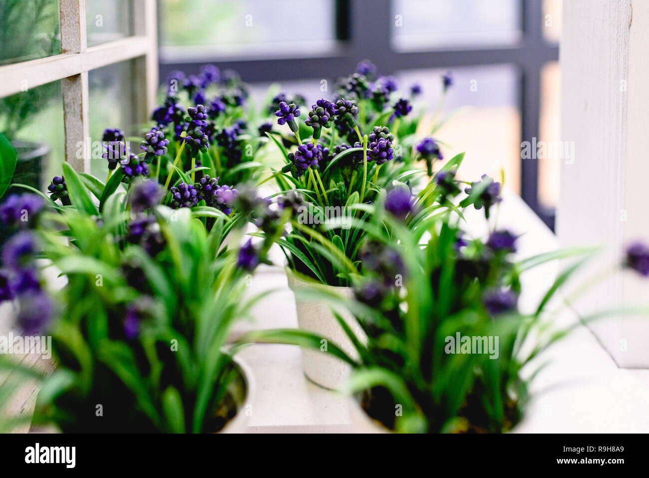 Flowers of plastic of intense colors to decorate the home. - Stock Image