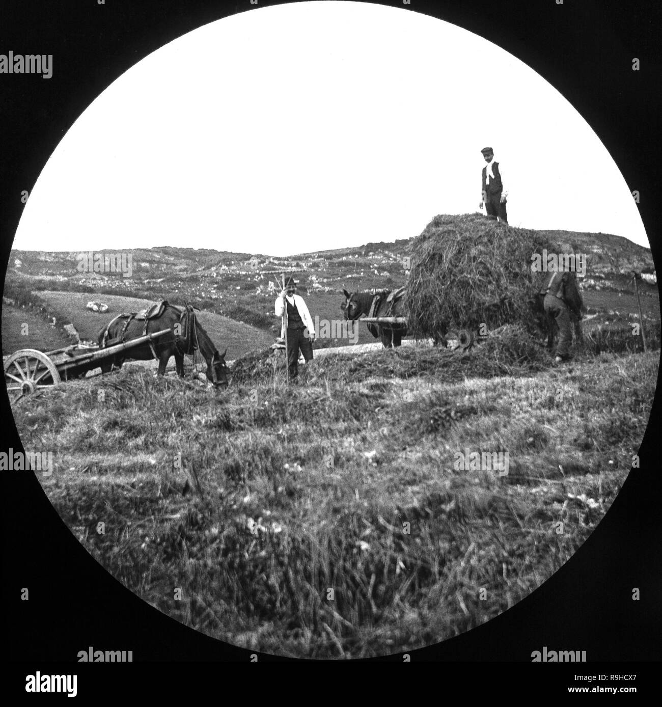 A late Victorian black and white photograph showing hay being gathered in a farm in England. Image shows three people working, loading the hay on to two horse drawn carts. Stock Photo