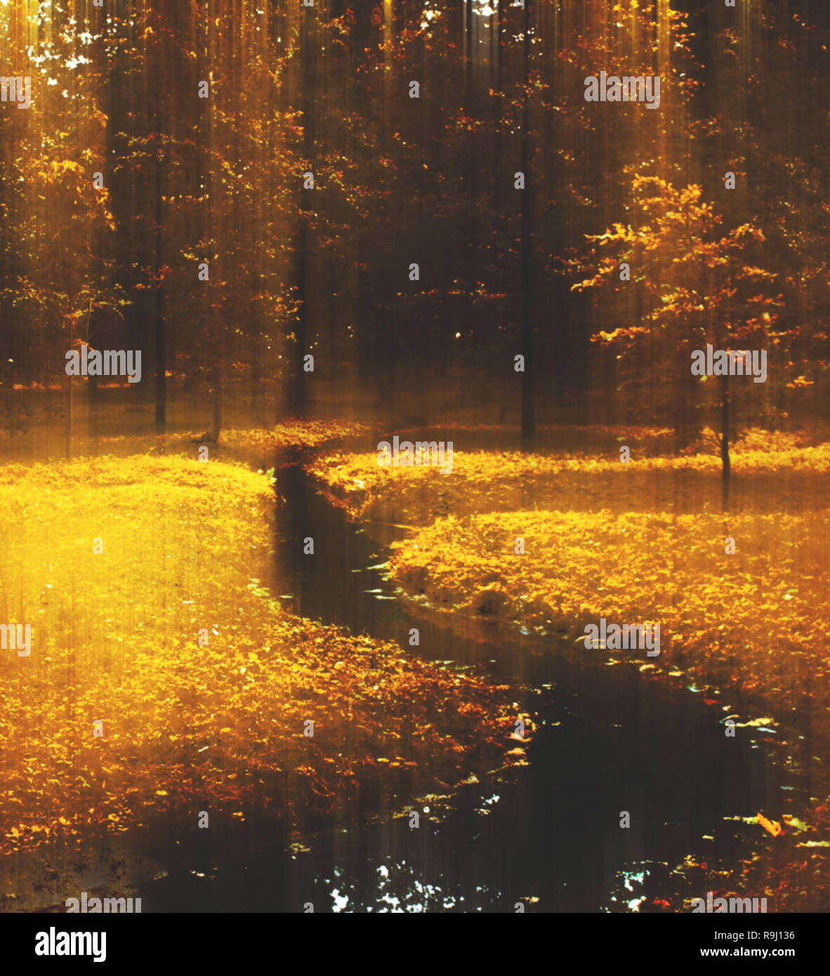 fall scenery, beauty of autumn - nature and environment concept, elegant visuals - Stock Image