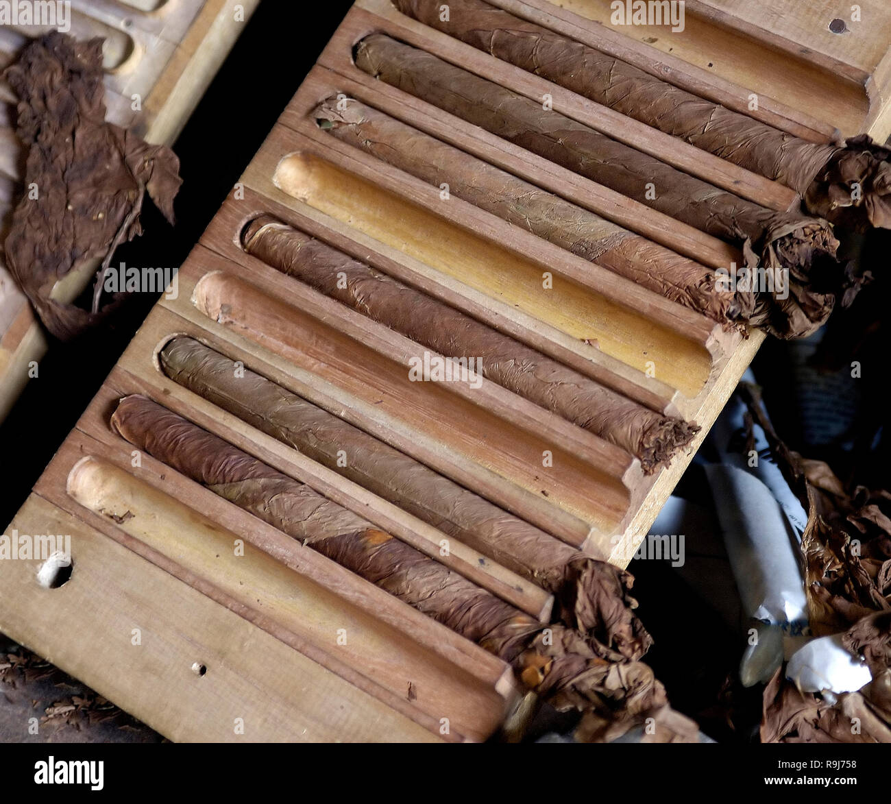 Closeup of handmade cigars from Cuban tobacco leaves. Traditional manufacture of cigars in Cuba - Stock Image