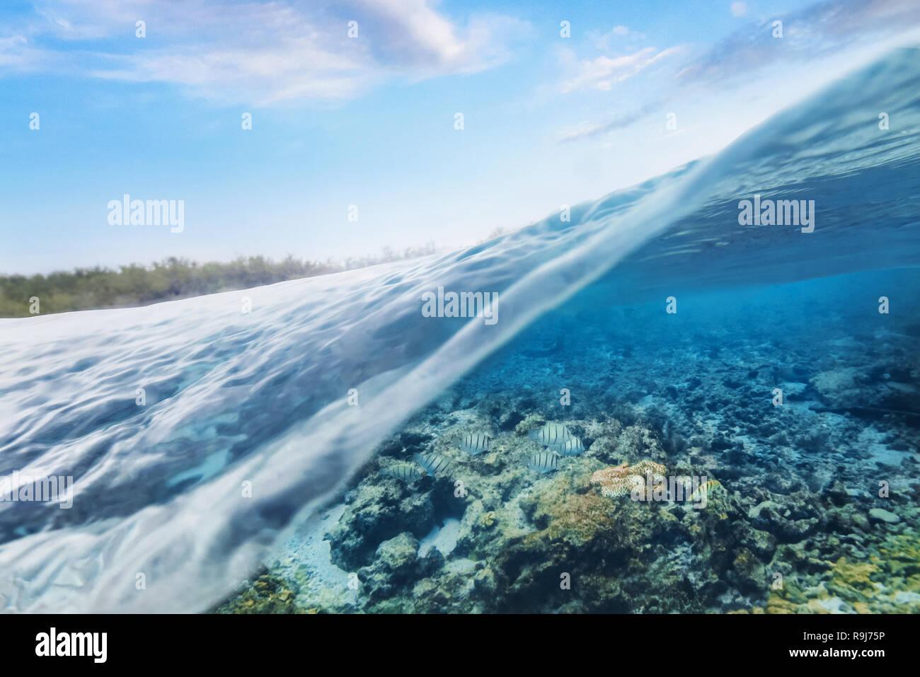 Underwater split level scene - Stock Image