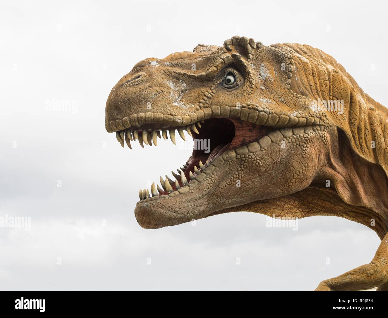 Head Profile Of A Tyrannosaurus Rex T Rex Model Biggest Carnivore Dinosaur White Background Stock Photo Alamy