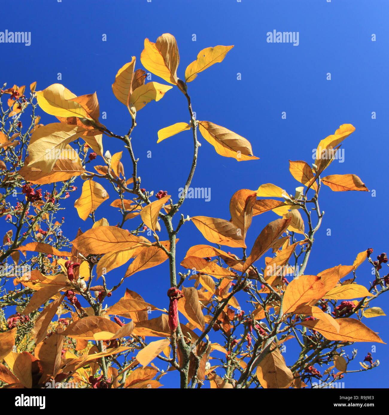Autumn in Belgium - Stock Image