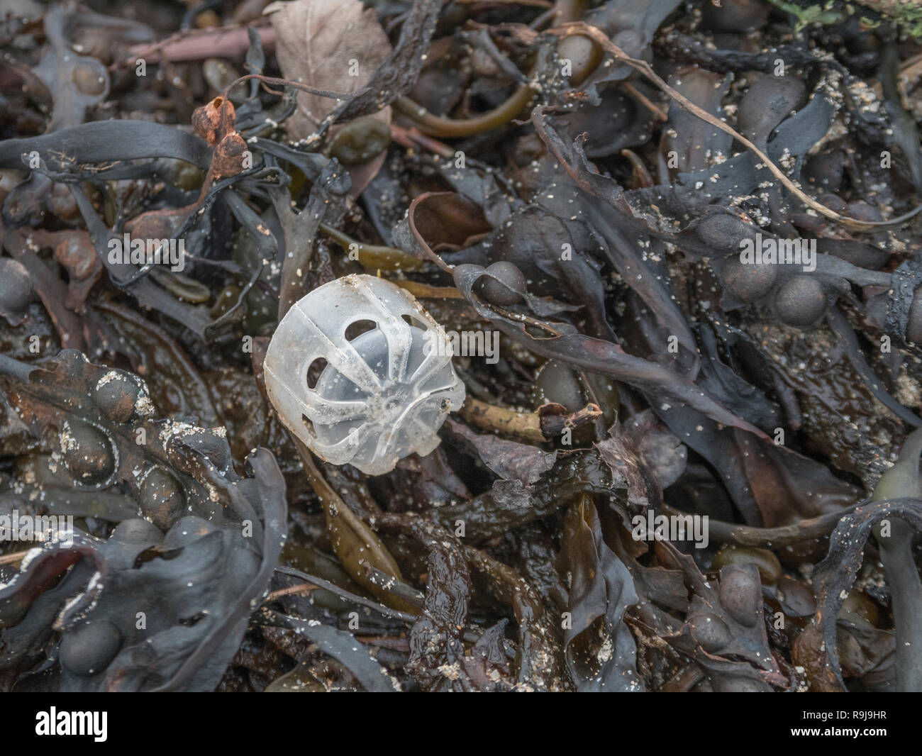 Part of plastic bottle washed up on shore & polluting the shoreline. Metaphor plastic pollution, environmental pollution, war on plastic. - Stock Image