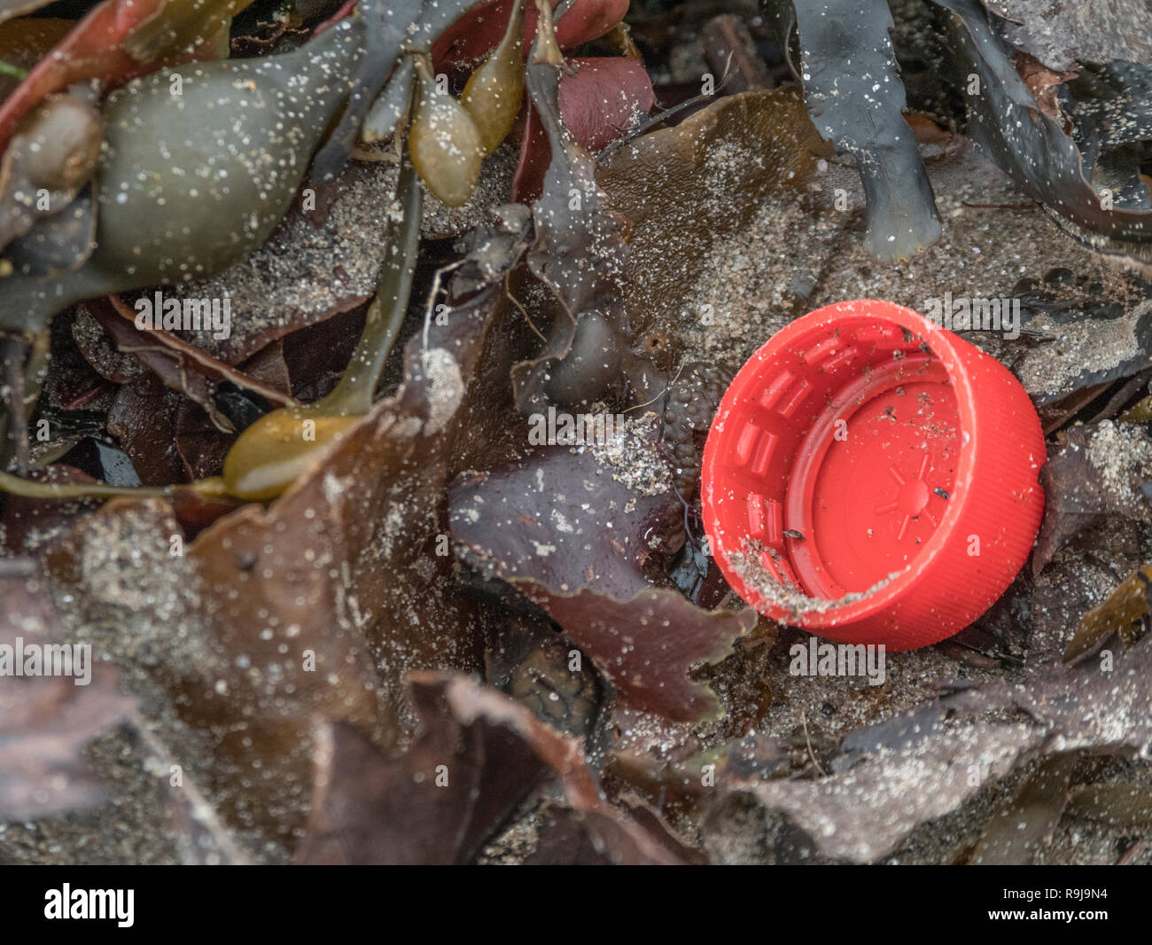 Part of plastic bottle washed up on shore & polluting shoreline. Metaphor plastic pollution, environmental pollution, war on plastic, plastic rubbish. - Stock Image