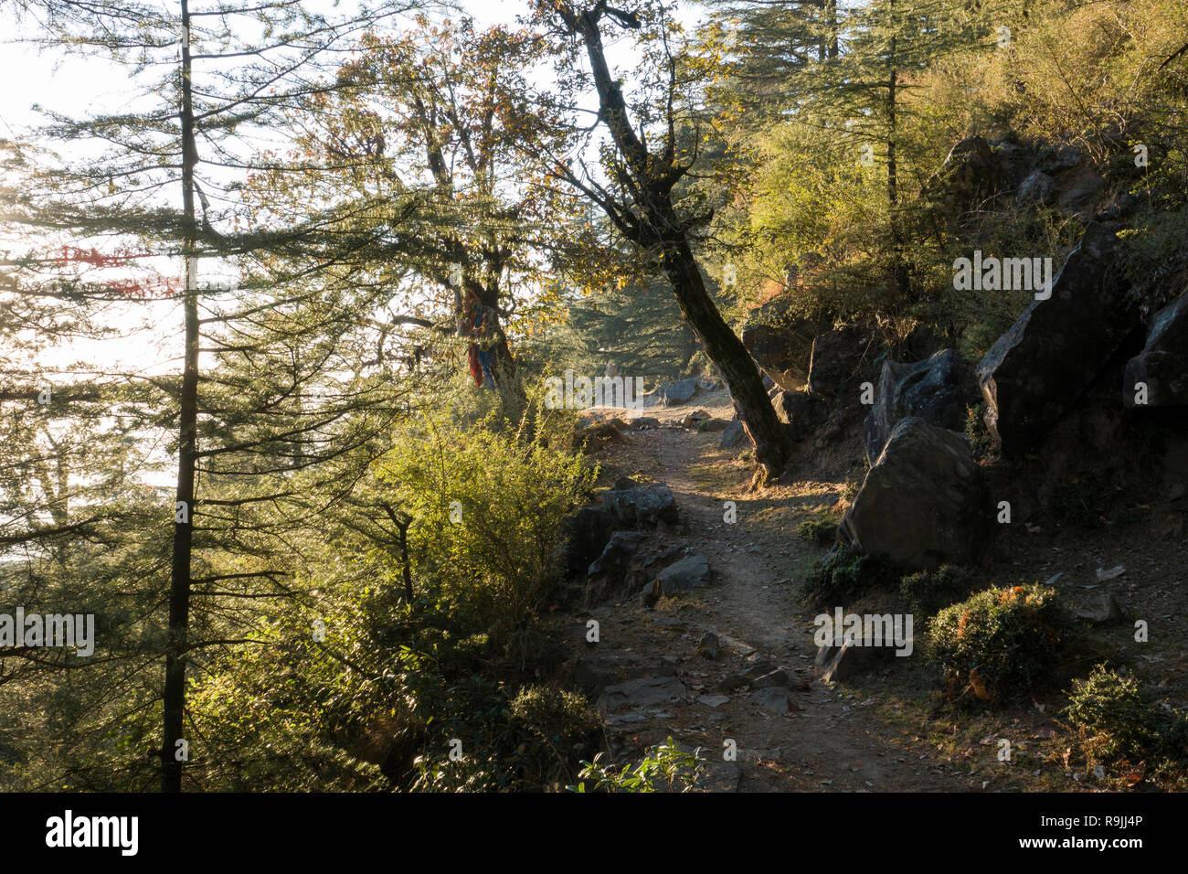 Trail through the forest in Dharamkot, Himachal Pradesh, India - Stock Image