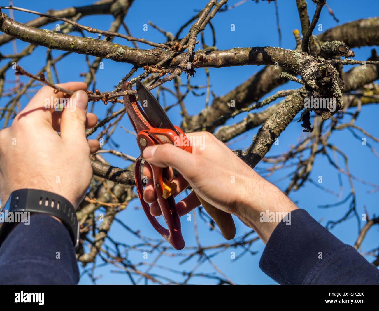 Garden shears woodcut Stock Photo