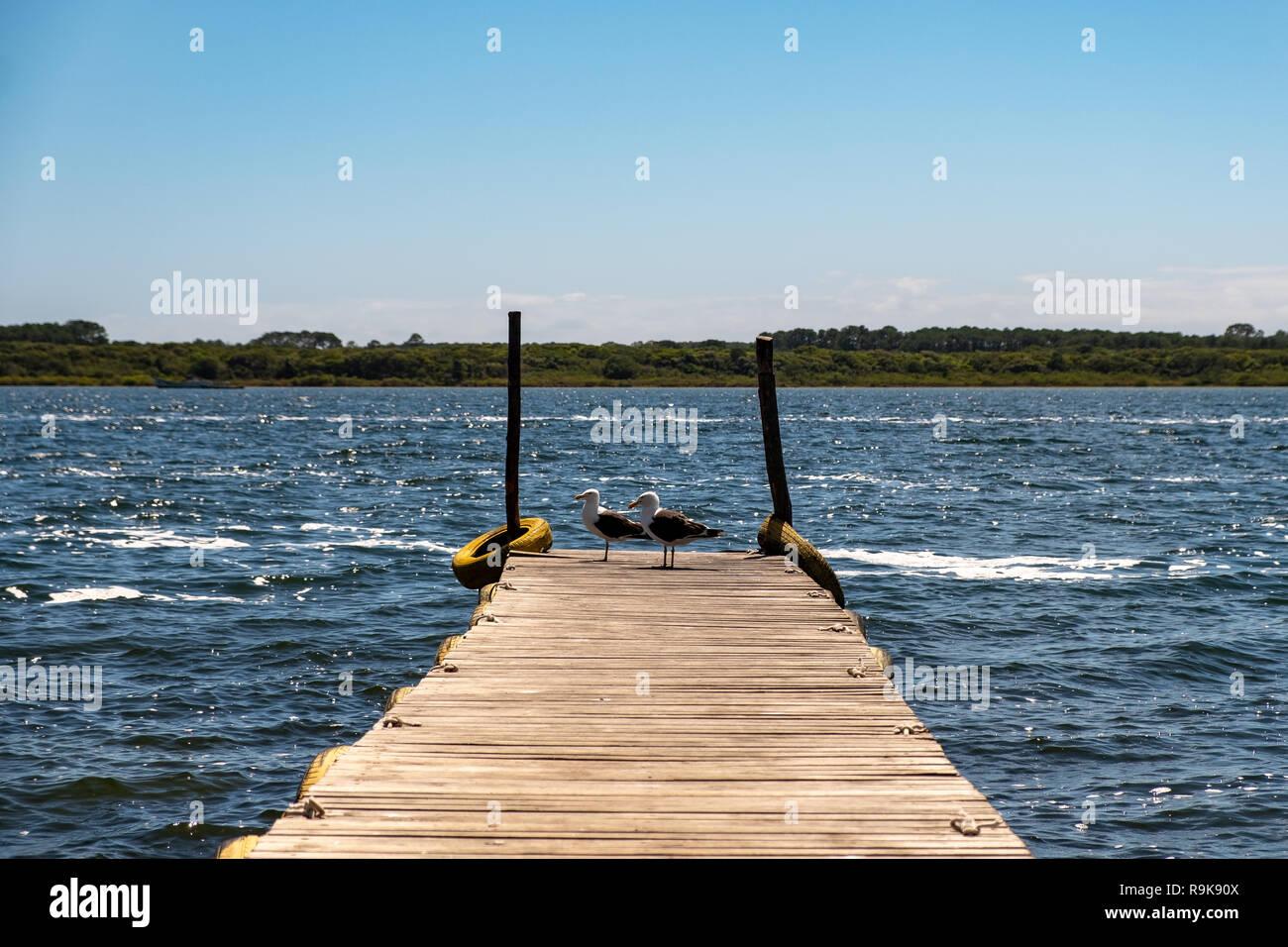 Two black an white birds landing on a outdoor wooden little pier at the blue lagoon.  Lagoa da Conceição, Florianópolis, Santa Catarina State, Brazil. - Stock Image