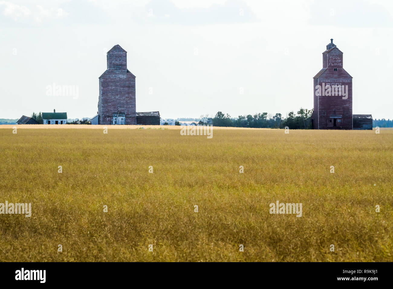 Old grain elevators in the hamlet of Lepine, Saskatchewan, Canada, 100 km north of Saskatoon. Agriculture drives the economy in the Wheat Province - Stock Image