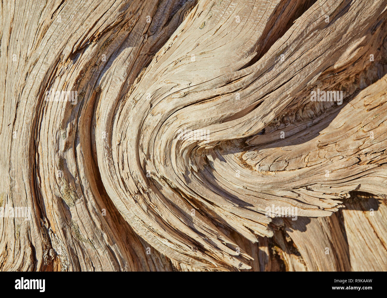 Elm Wood Log Stock Photos Elm Wood Log Stock Images Alamy