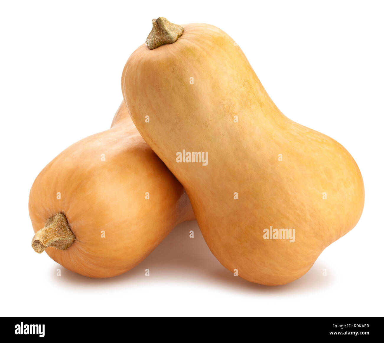 butternut squash path isolated Stock Photo