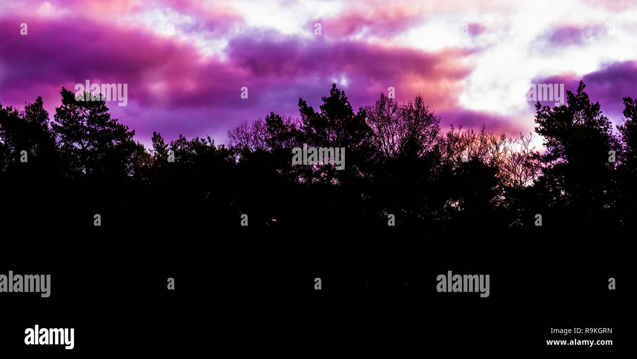 rare winter weather phenomenon in the sky, pink and purple polar stratospheric clouds, forest landscape background - Stock Image