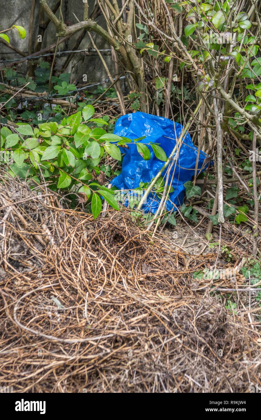 Blue plastic bag discarded in rural hedgerow. Metaphor plastic pollution, environmental pollution, war on plastic waste, plastic rubbish. Stock Photo