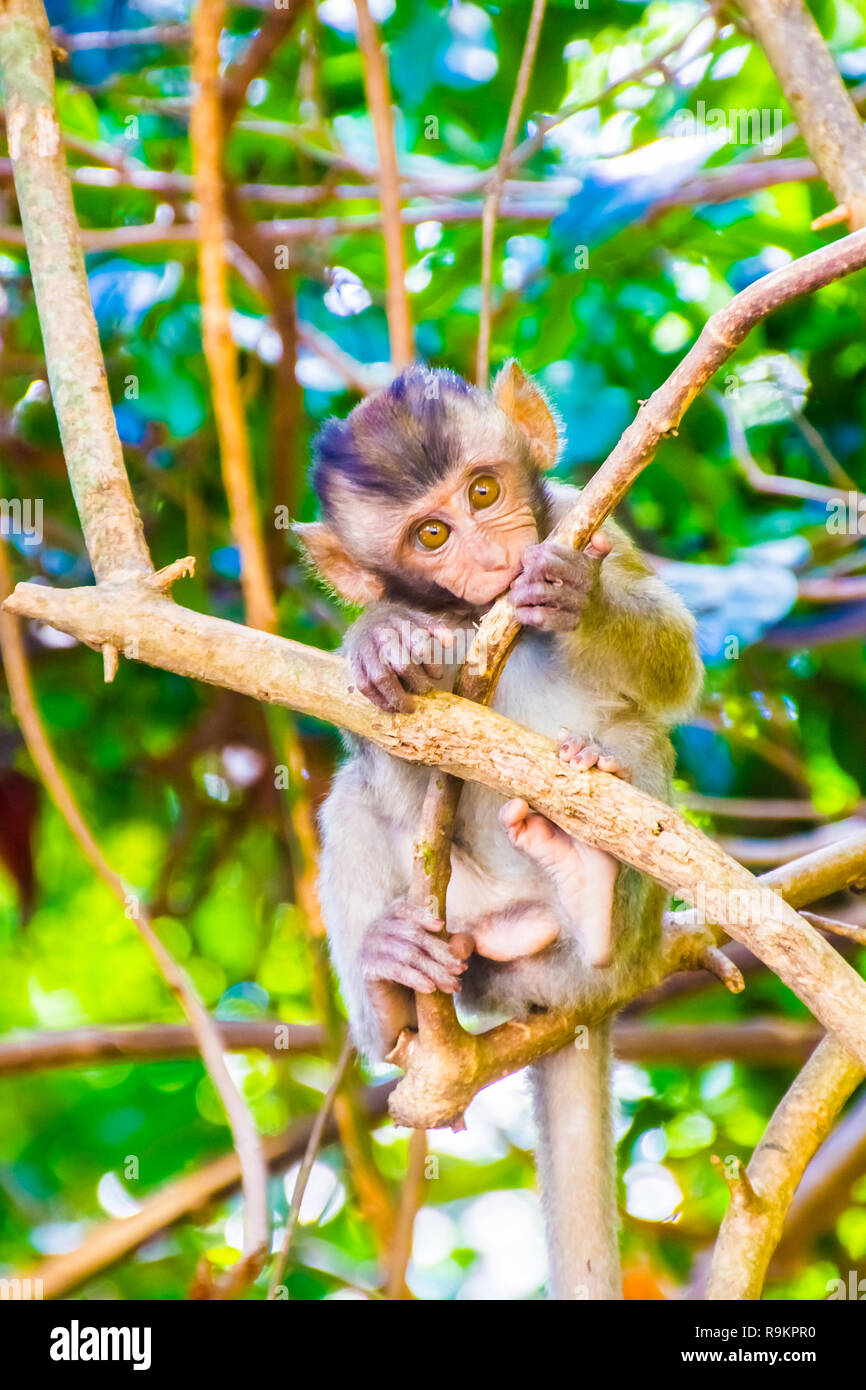 A Cute Wild Monkey Lives In A Natural Forest Railay Bay