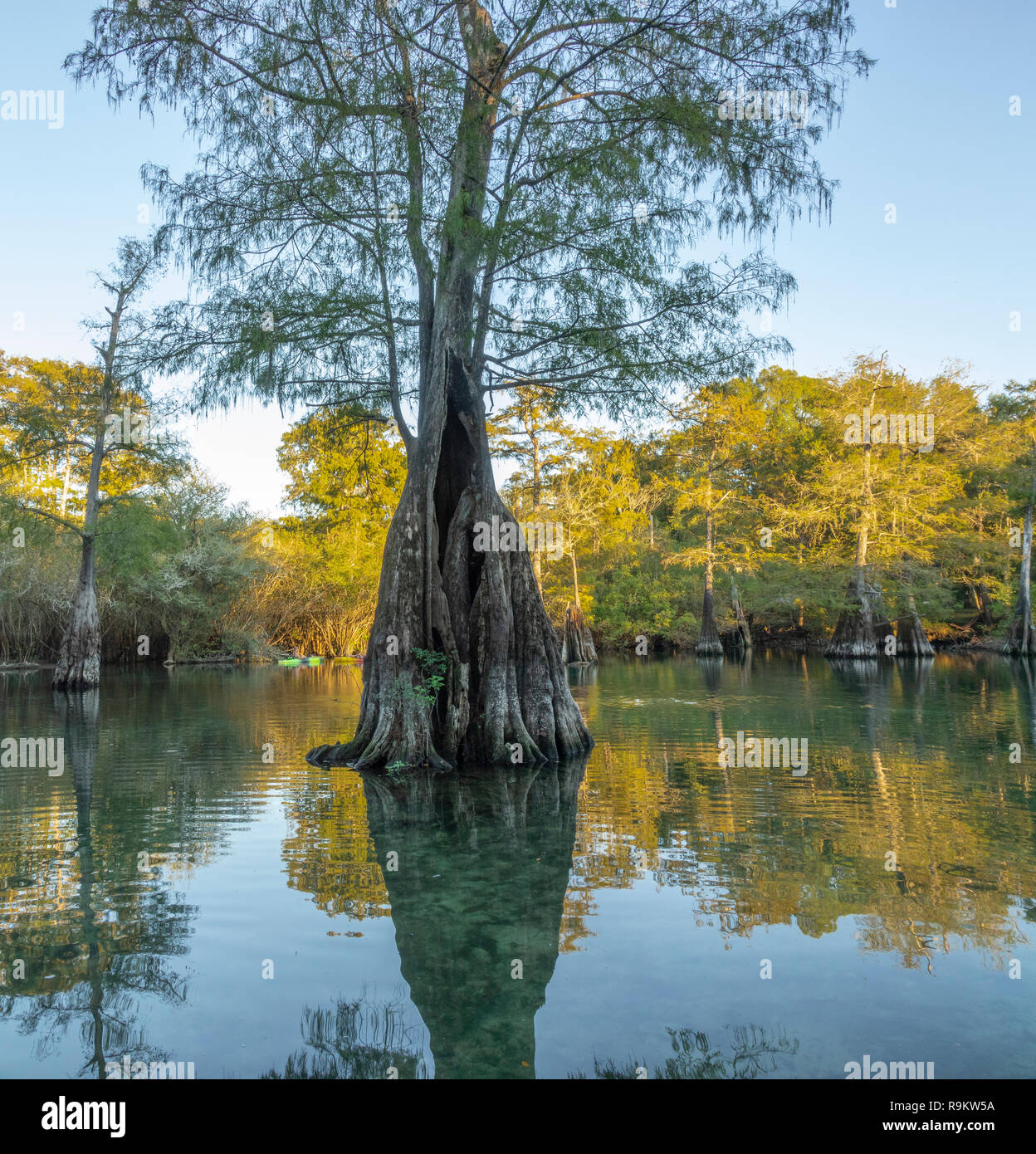 kayakers at Rock Bluff Spring on the Suwanneee River, Gilchrist County, Florida - Stock Image