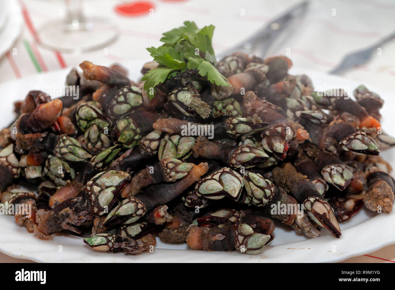 A dish with lots of freshly cooked barnacles at home. Stock Photo