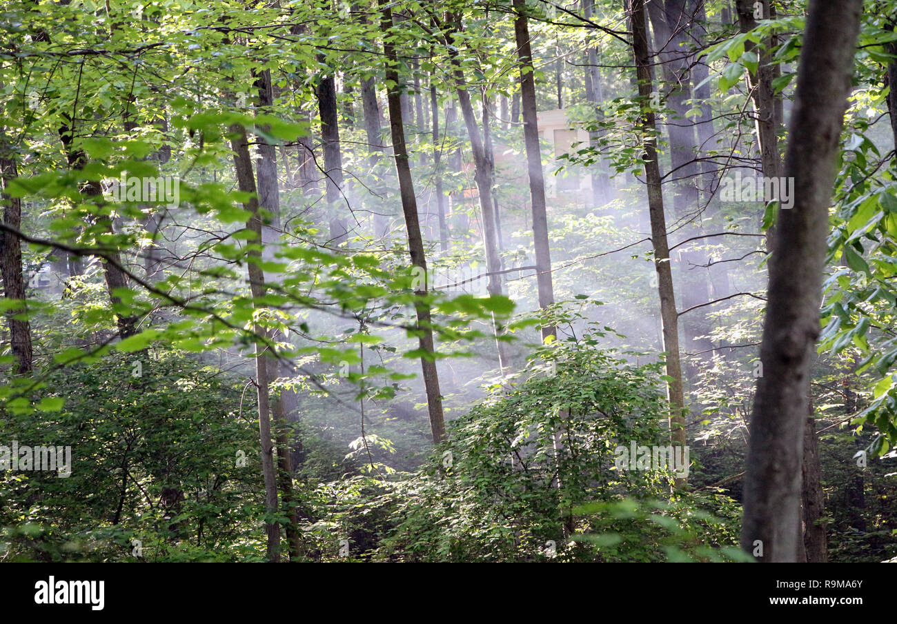 Sunlight Streaming through Trees Stock Photo