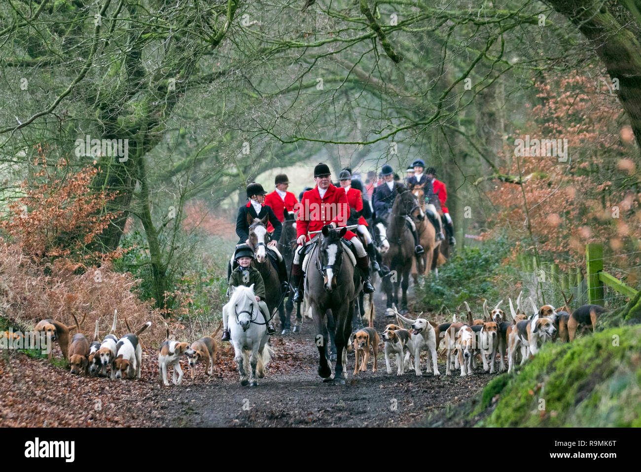 FOX HUNTING BEAGLES HORSES HOUR OF MEETING DOGS HUNT