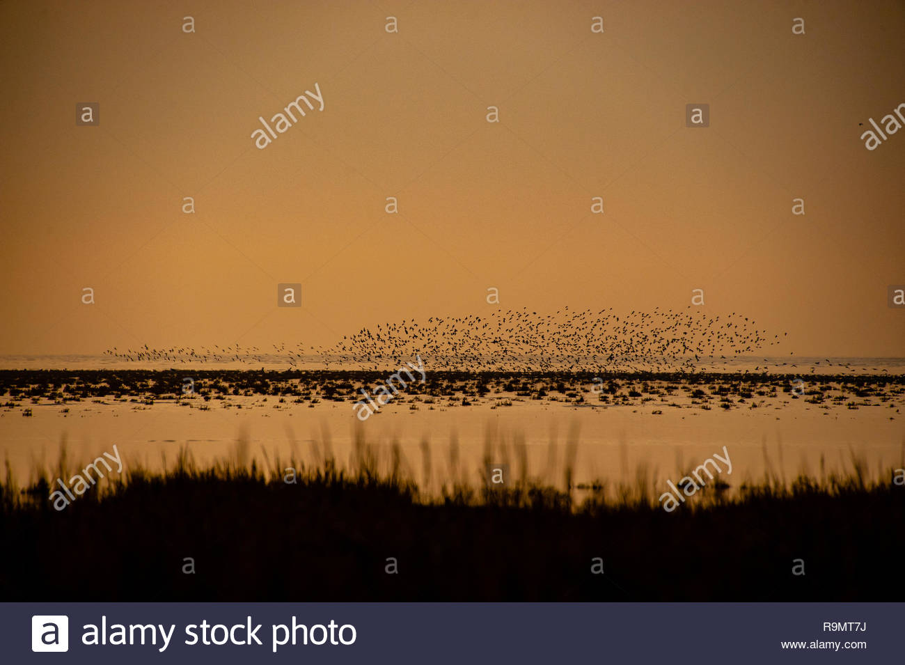 UK Weather, Southport, Merseyside, England, UK. 26th Dec, 2018. Starling murmuration on a largely grey murky Boxing day afternoon at RSPB Marshside Nature Reserve Southport. View from across the Marshes on Southport Coast, Southport, Merseyside, Lancashire, England UK Credit: Christopher Canty Photography/Alamy Live News Stock Photo