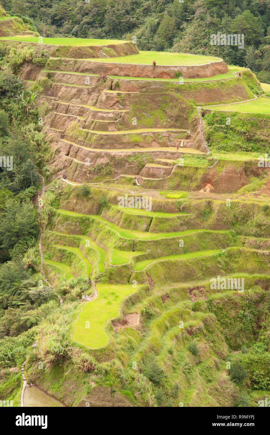 Banaue Rice Terraces, Ifugao Province, Cordillera Region, Luzon, Philippines, Asia, South Asia, UNESCO World Heritage - Stock Image