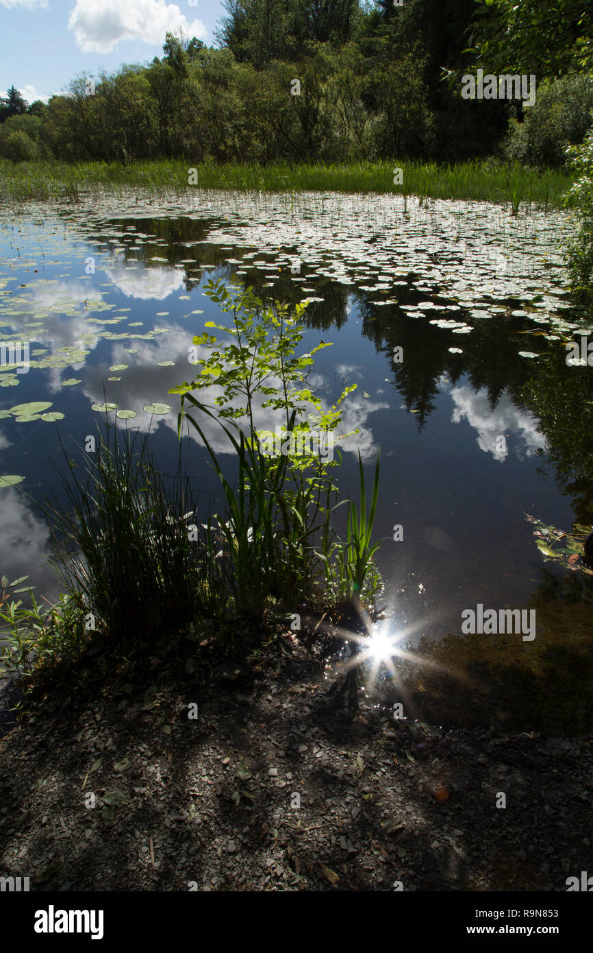 Sun glinting off lake water - Stock Image