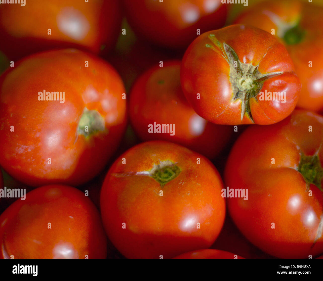 Tomato  seconds in a pile - Stock Image