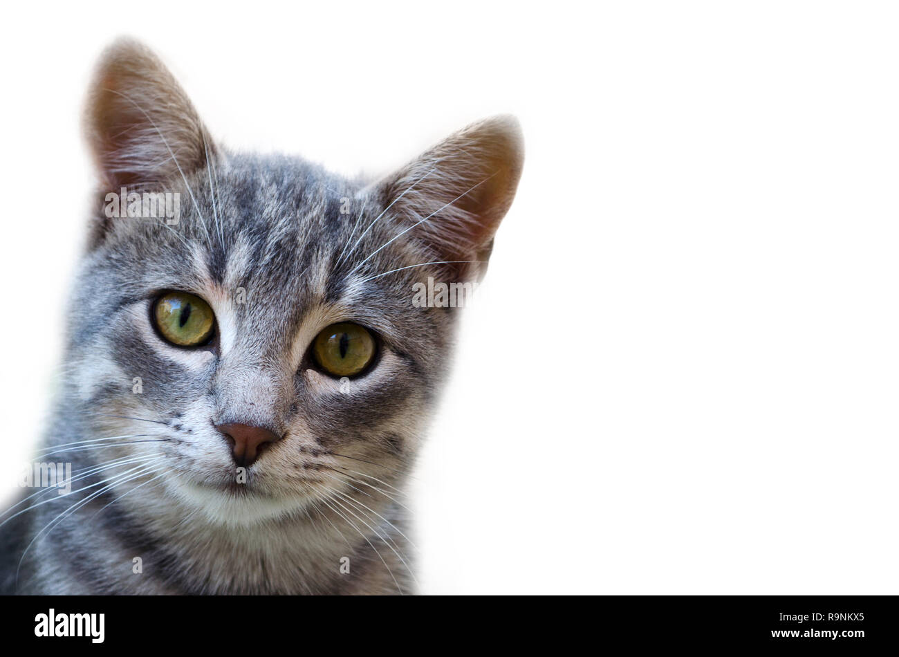 Cute cat looking at the camera isolated on white background Stock Photo