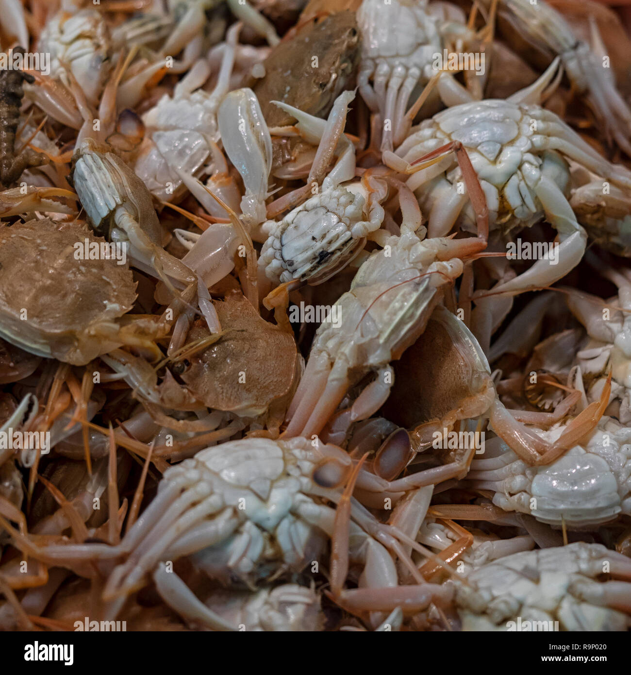 Crabs For Sale Stock Photos & Crabs For Sale Stock Images - Alamy