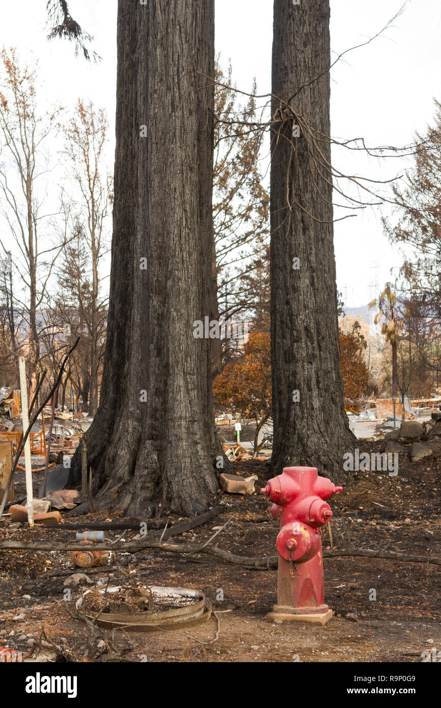 Trees and Hydrant - These images were captured in neighborhoods near Santa Rosa, California, where wildfires in early October 2017. - Stock Image