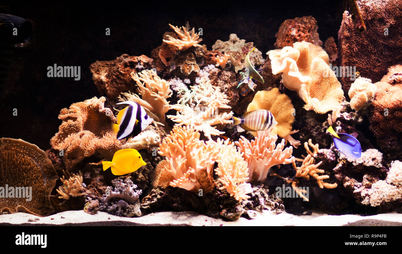 autiful planted tropical freshwater aquarium with fishes - Stock Image